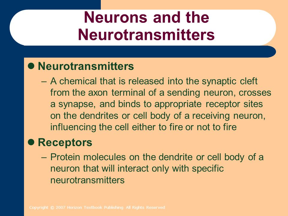 Copyright © 2007 Horizon Textbook Publishing All Rights Reserved Neurons and the Neurotransmitters Neurotransmitters –A chemical that is released into the synaptic cleft from the axon terminal of a sending neuron, crosses a synapse, and binds to appropriate receptor sites on the dendrites or cell body of a receiving neuron, influencing the cell either to fire or not to fire Receptors –Protein molecules on the dendrite or cell body of a neuron that will interact only with specific neurotransmitters