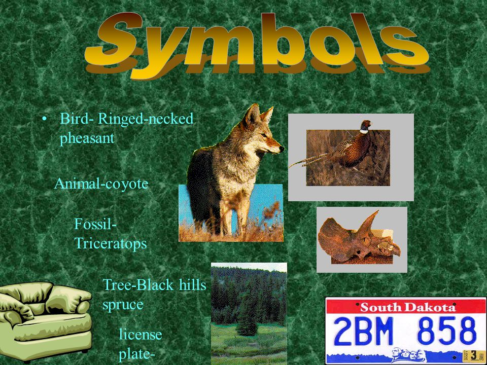 Bird- Ringed-necked pheasant Animal-coyote Fossil- Triceratops Tree-Black hills spruce license plate-