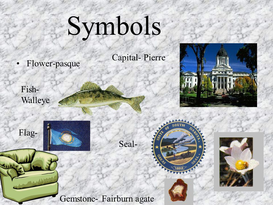 Flower-pasque Fish- Walleye Flag- Gemstone- Fairburn agate Seal- Capital- Pierre Symbols
