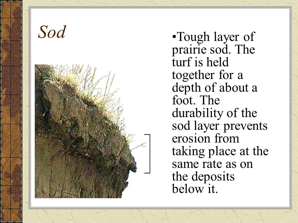 Sod Tough layer of prairie sod. The turf is held together for a depth of about a foot. The durability of the sod layer prevents erosion from taking pl
