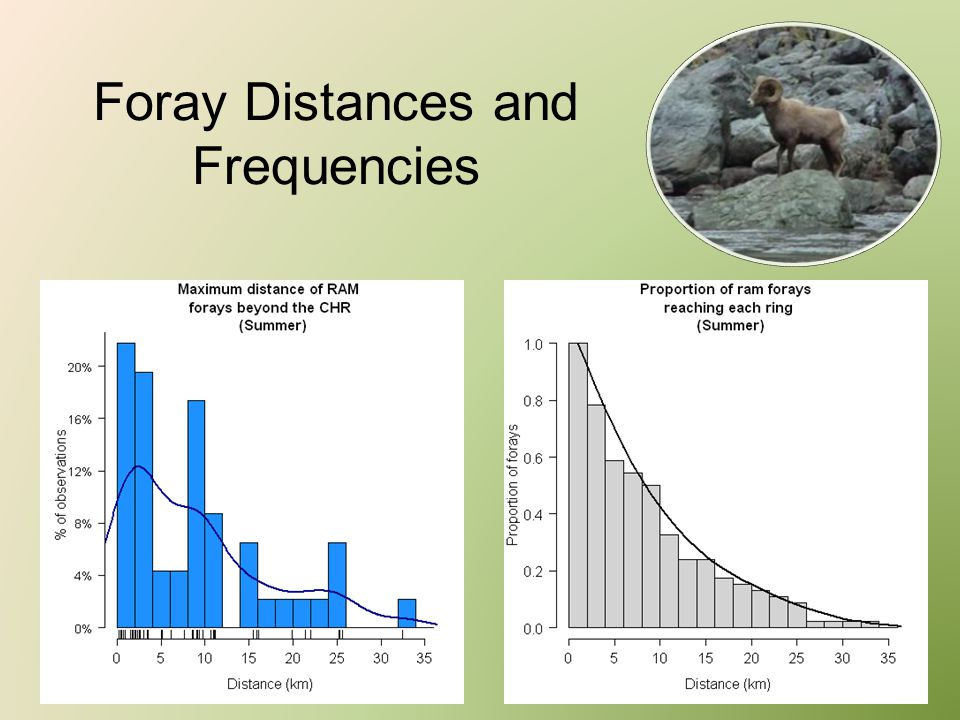 Foray Distances and Frequencies