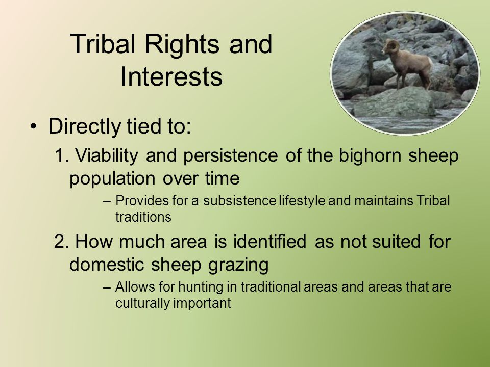 Tribal Rights and Interests Directly tied to: 1. Viability and persistence of the bighorn sheep population over time –Provides for a subsistence lifes
