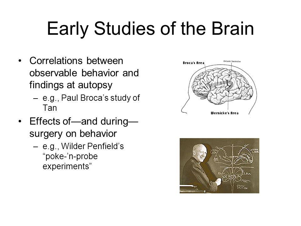 Early Studies of the Brain Correlations between observable behavior and findings at autopsy –e.g., Paul Broca's study of Tan Effects of—and during— su