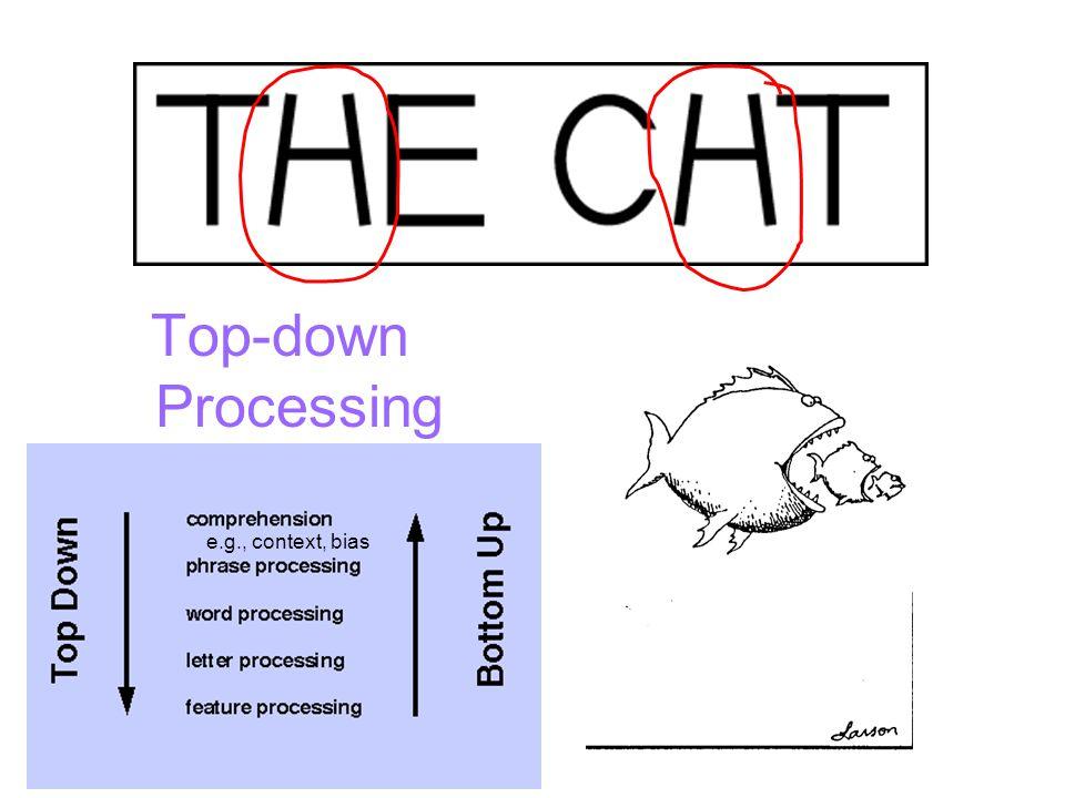 Top-down Processing e.g., context, bias