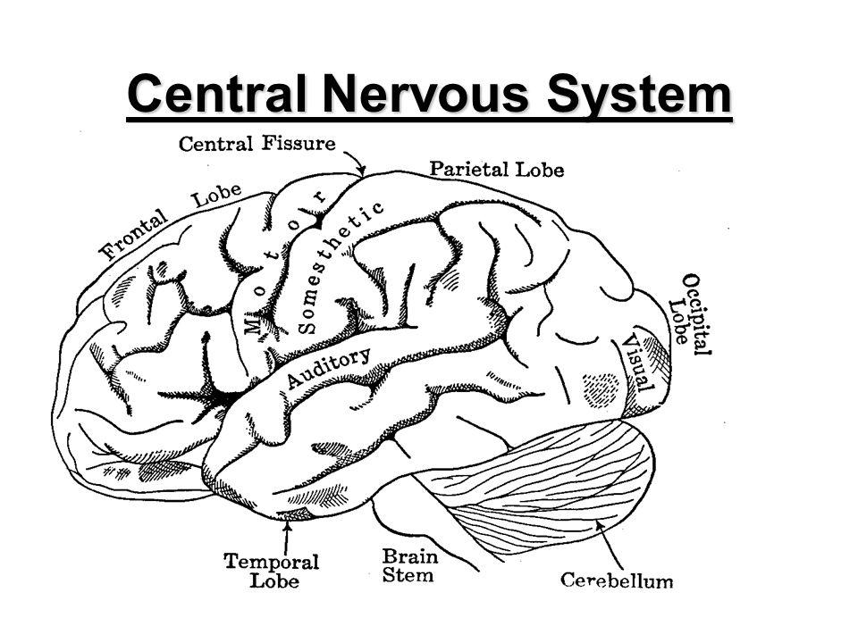 1 Central Nervous System