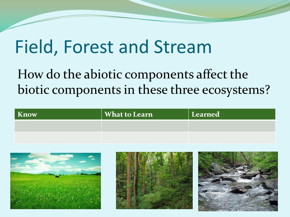 Field, Forest and Stream KnowWhat to LearnLearned How do the abiotic components affect the biotic components in these three ecosystems?