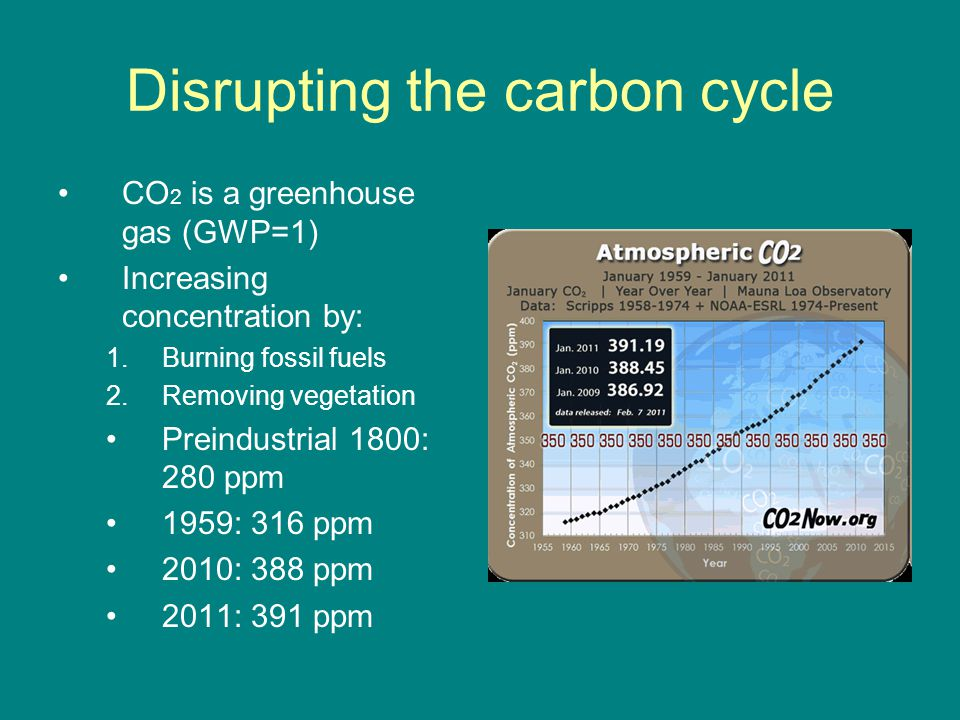 Disrupting the carbon cycle CO 2 is a greenhouse gas (GWP=1) Increasing concentration by: 1.Burning fossil fuels 2.Removing vegetation Preindustrial 1