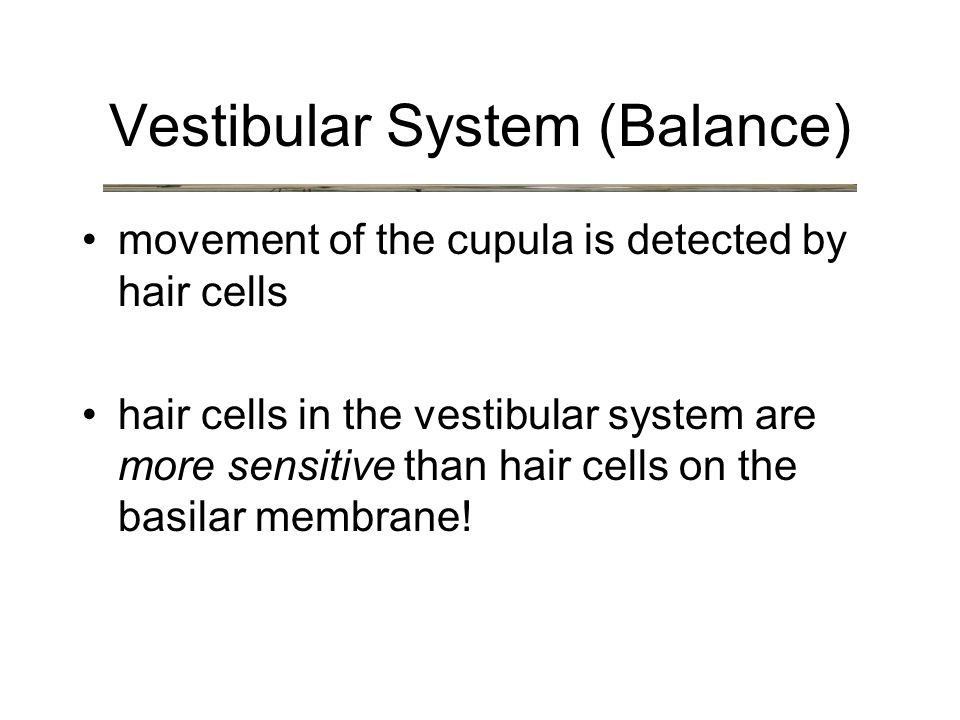 Vestibular System (Balance) movement of the cupula is detected by hair cells hair cells in the vestibular system are more sensitive than hair cells on the basilar membrane!