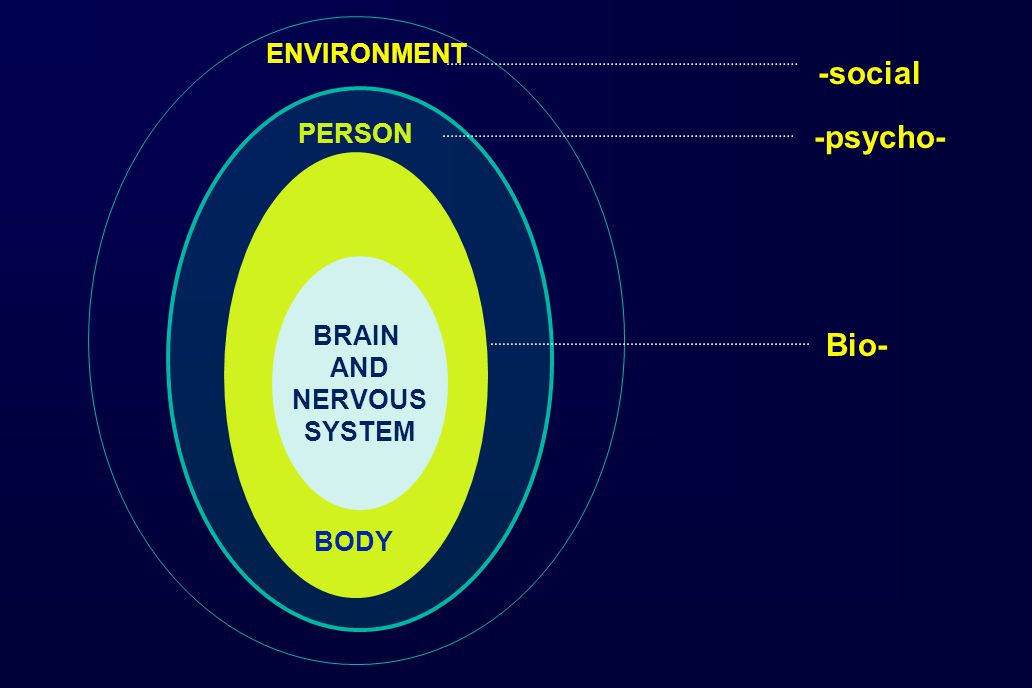 BRAIN AND NERVOUS SYSTEM ENVIRONMENT PERSON BODY Bio- -psycho- -social