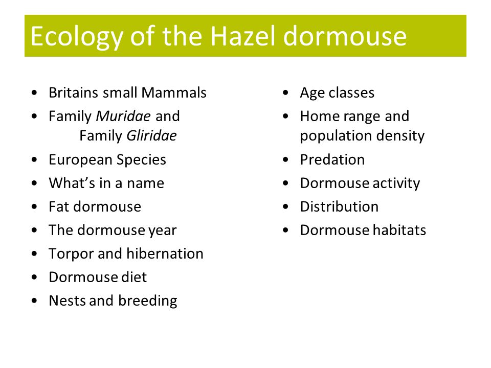 Ecology of the Hazel dormouse Britains small Mammals Family Muridae and Family Gliridae European Species What's in a name Fat dormouse The dormouse ye