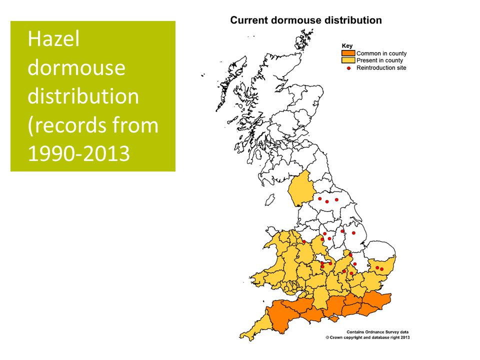Hazel dormouse distribution (records from 1990-2013