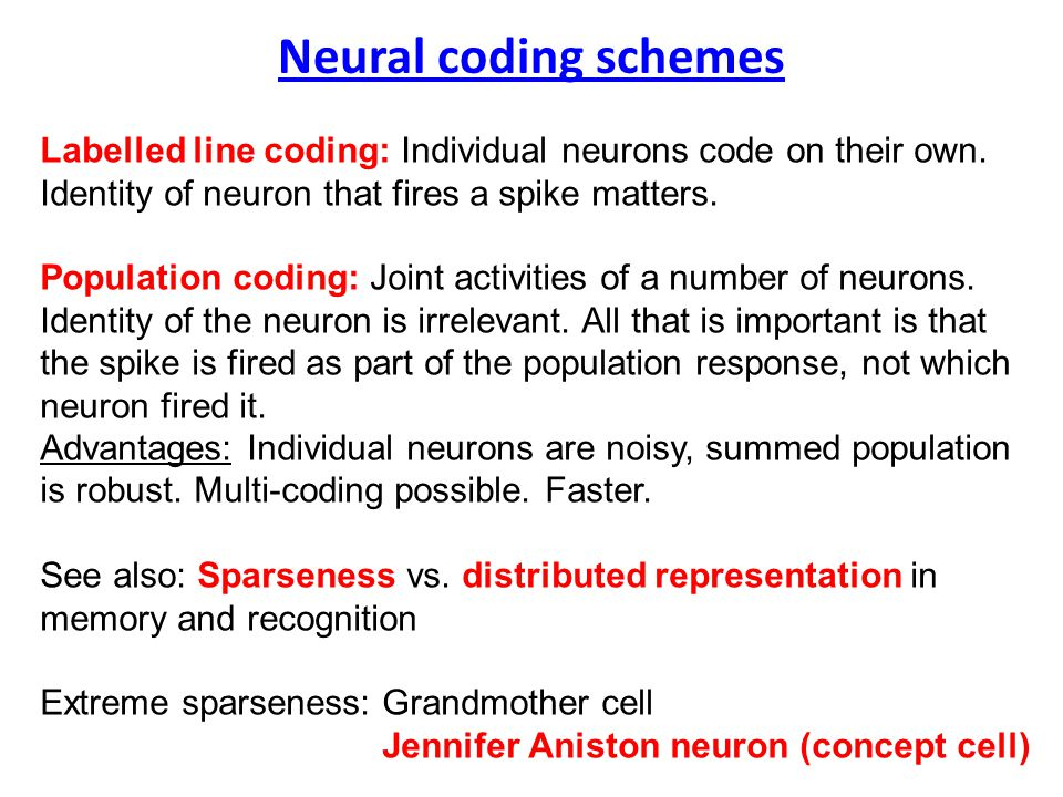 Neural coding schemes Labelled line coding: Individual neurons code on their own.