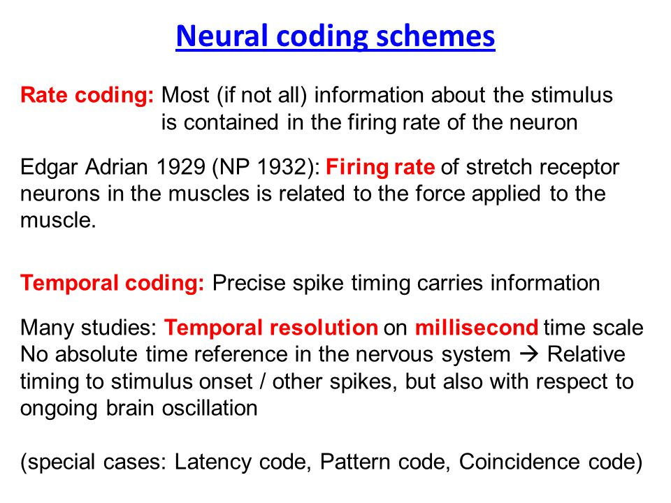 Neural coding schemes Rate coding: Most (if not all) information about the stimulus is contained in the firing rate of the neuron Edgar Adrian 1929 (NP 1932): Firing rate of stretch receptor neurons in the muscles is related to the force applied to the muscle.