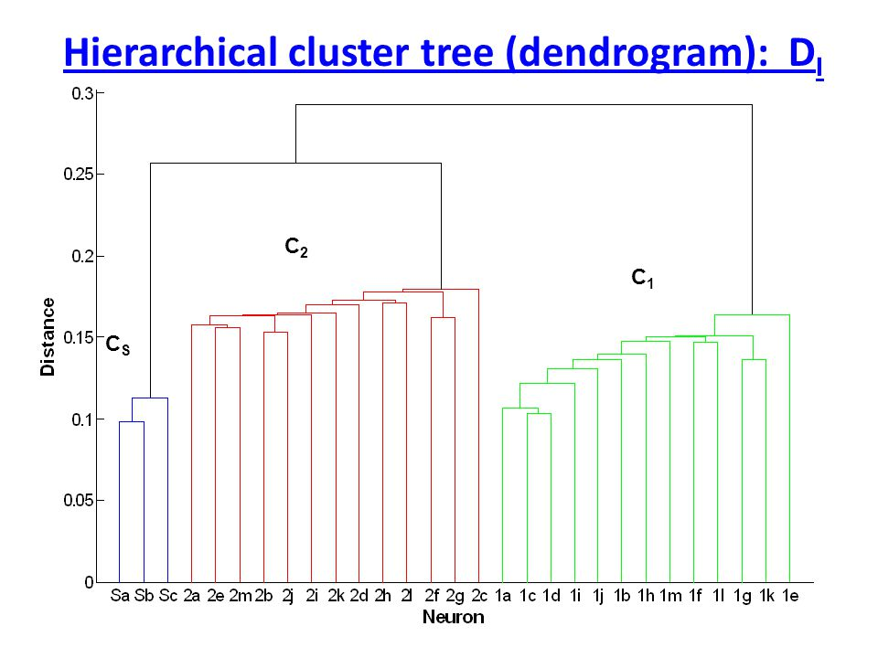 Hierarchical cluster tree (dendrogram): D I C2C2 C1C1 CSCS