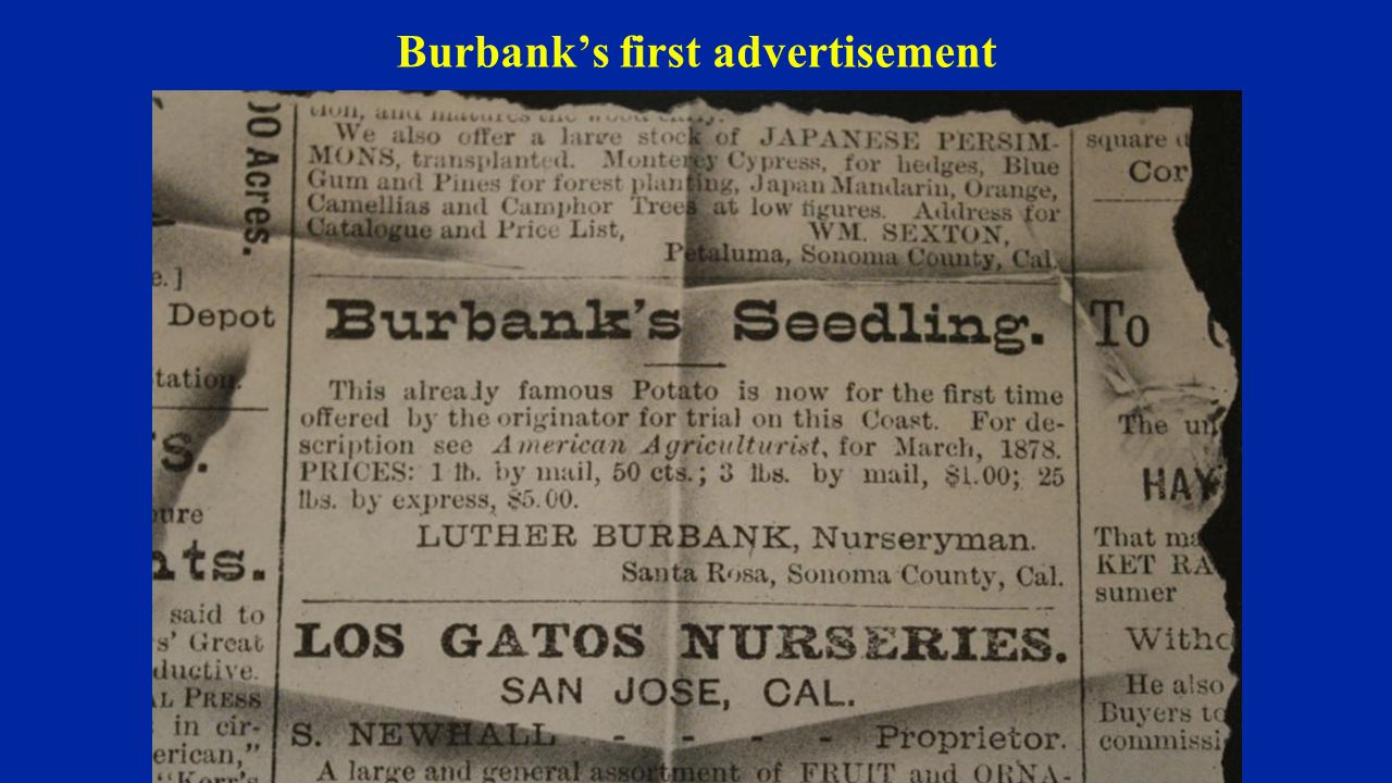 Burbank's first advertisement