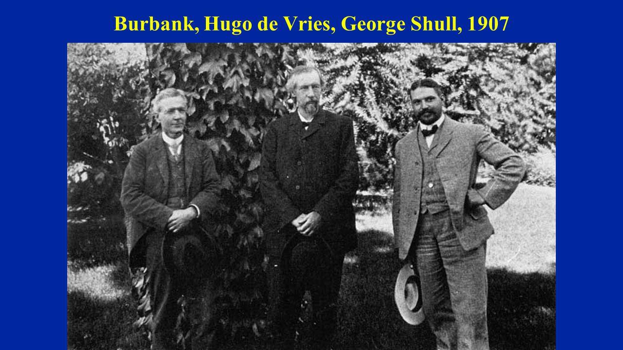 Burbank, Hugo de Vries, George Shull, 1907