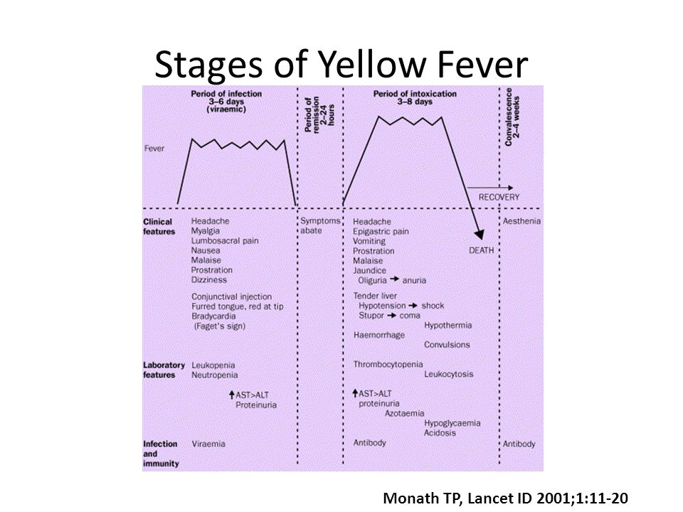 Stages of Yellow Fever Monath TP, Lancet ID 2001;1:11-20