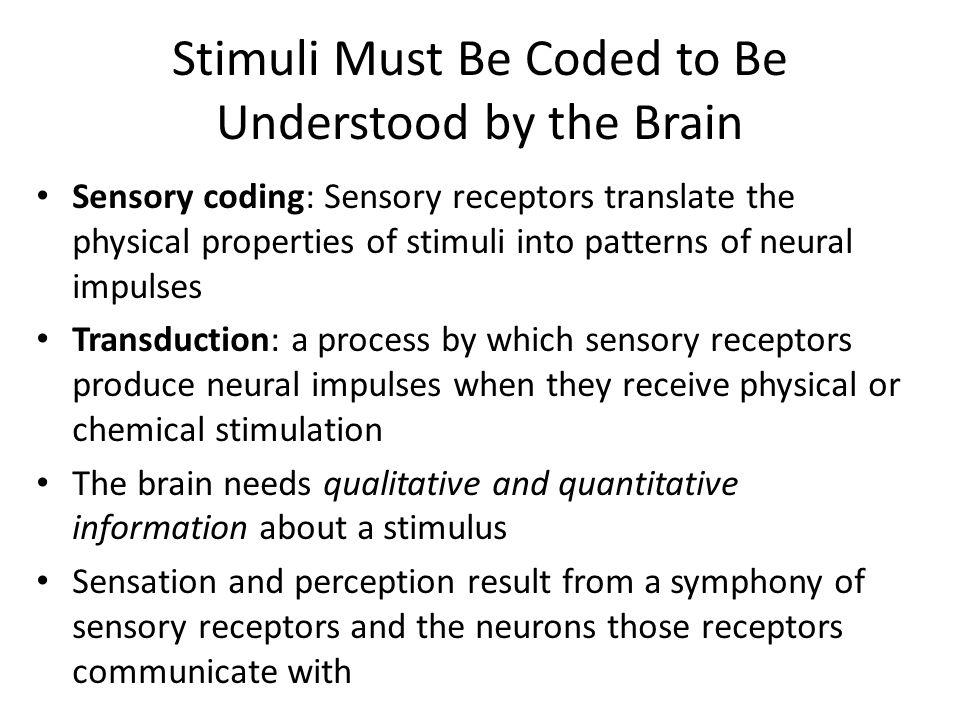 Stimuli Must Be Coded to Be Understood by the Brain Sensory coding: Sensory receptors translate the physical properties of stimuli into patterns of ne