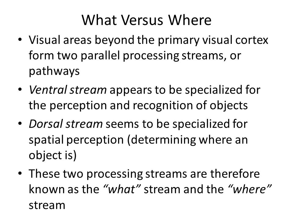 What Versus Where Visual areas beyond the primary visual cortex form two parallel processing streams, or pathways Ventral stream appears to be special