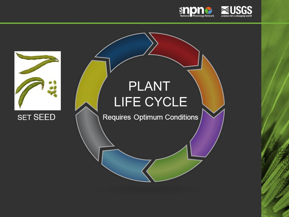 PLANT LIFE CYCLE SET SEED Requires Optimum Conditions