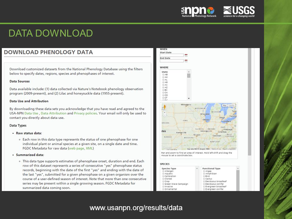 www.usanpn.org/results/data DATA DOWNLOAD