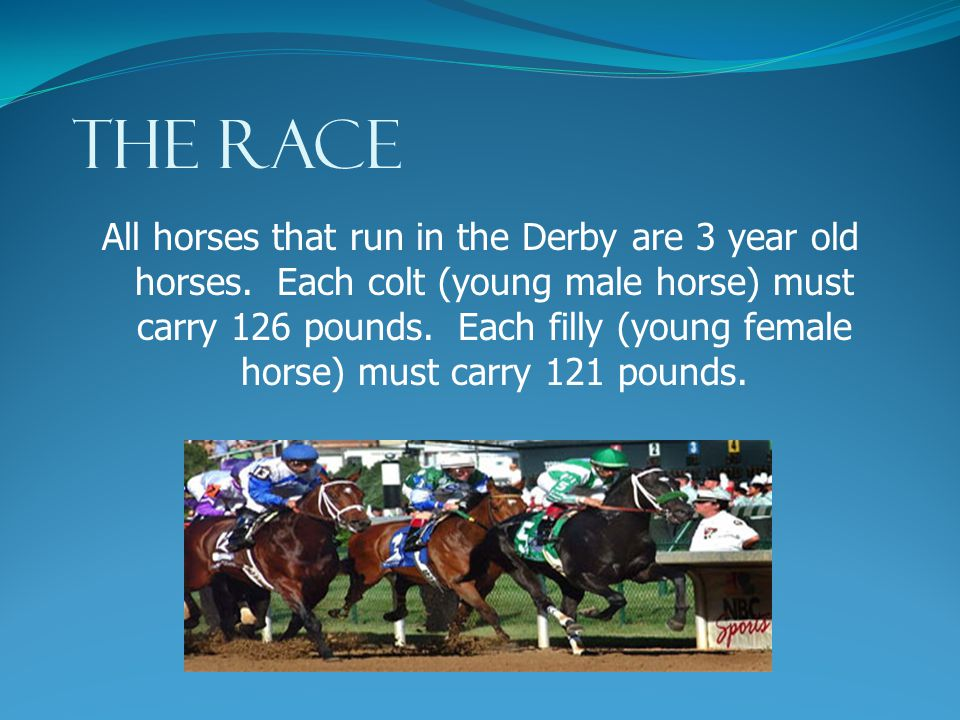 "THE RACE The horses race for 1 ¼ miles which takes about 2 minutes. The Kentucky Derby is sometimes called the ""most exciting two minutes in sports""."