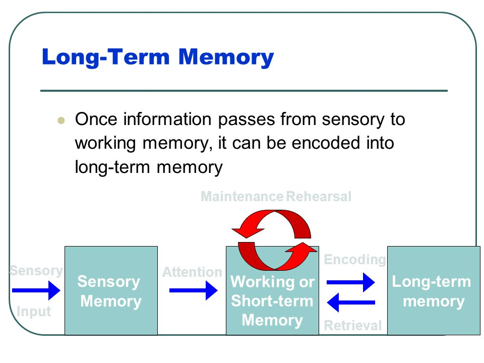 Maintenance Rehearsal Mental or verbal repetition of information allows information to remain in working memory longer than the usual 30 seconds Worki
