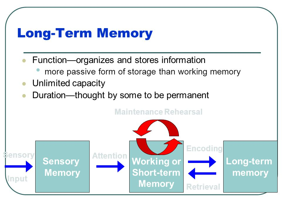 Long-Term Memory Once information passes from sensory to working memory, it can be encoded into long-term memory Long-term memory Working or Short-ter
