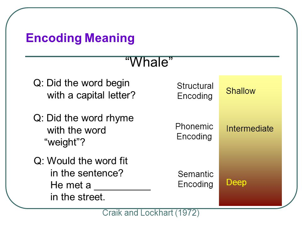 What Do We Encode?  Semantic Encoding  encoding of meaning  including meaning of words  Acoustic Encoding  encoding of sound  especially sound o