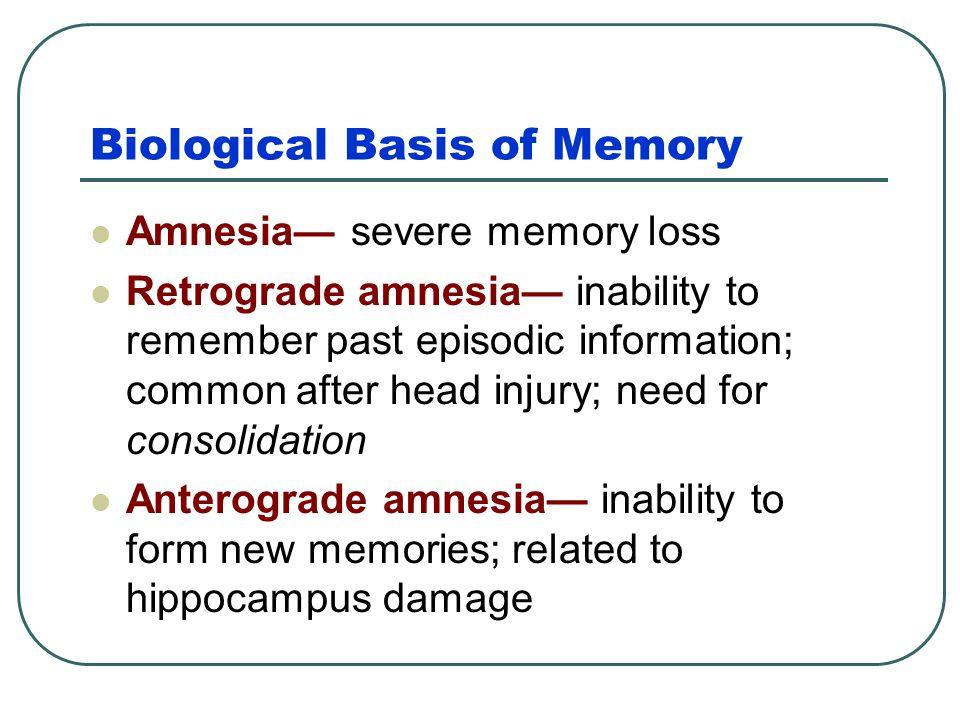 Cerebellum Cerebellum – a neural center in the hindbrain that processes implicit memories.