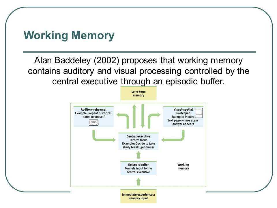 Memory  Sensory Memory  the immediate, initial recording of sensory information in the memory system  Working Memory  focuses more on the processi