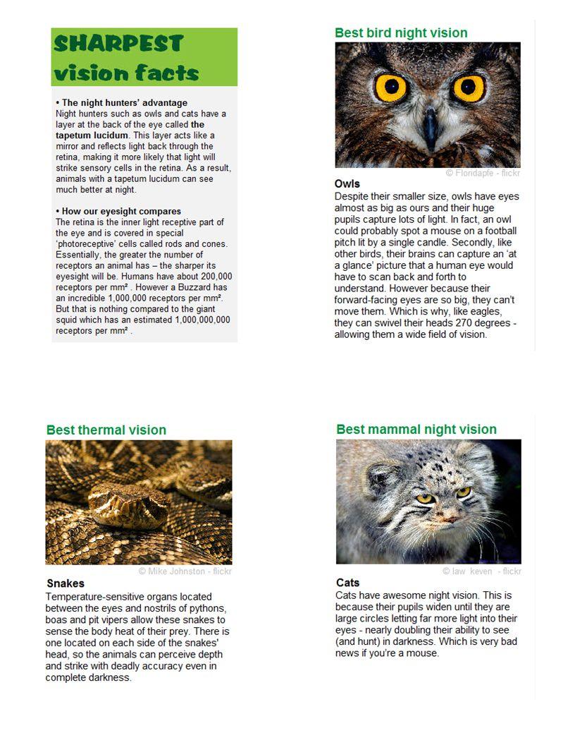 Vision 3: Best Bird Night Vision Sharpest Vison Facts Vision 1: Best Thermal Vision Vision 2: Best Mammal Night Vison