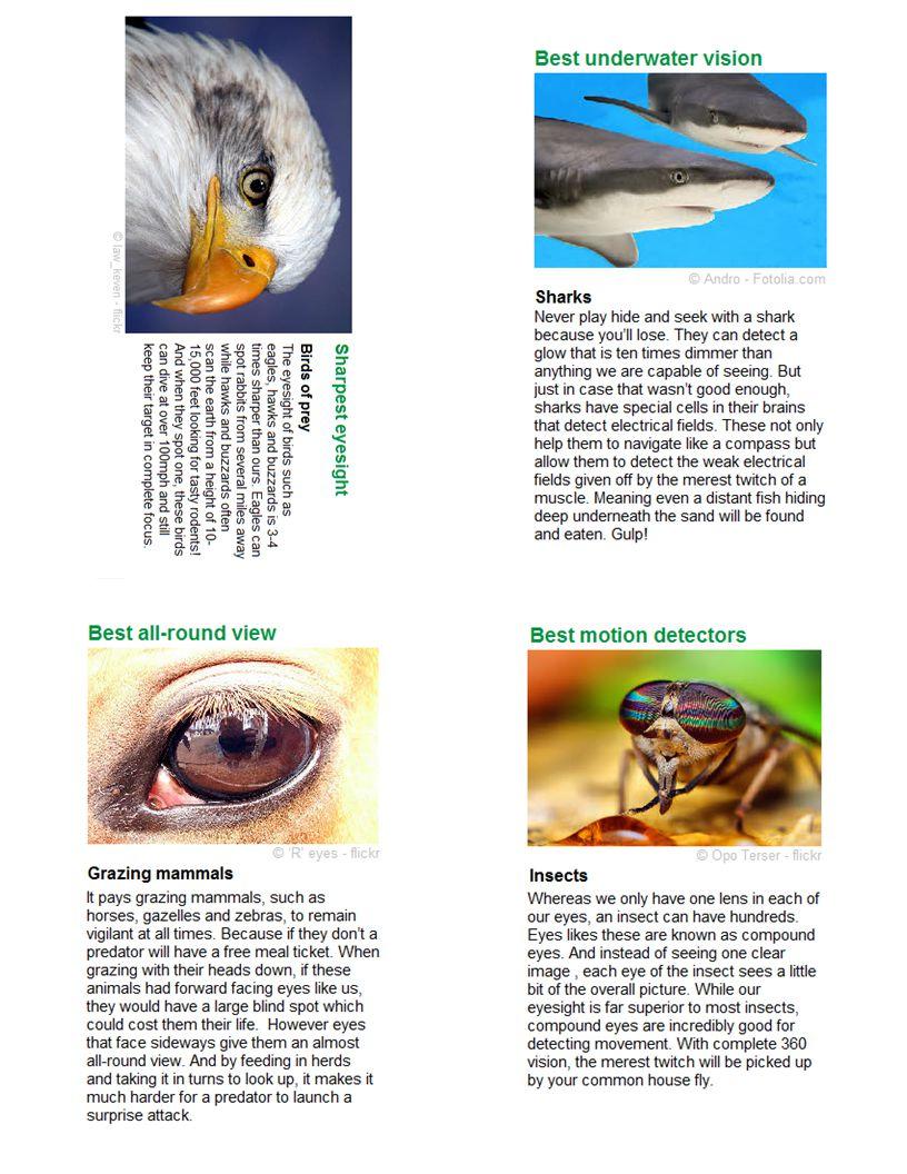 Vision 7: Best Underwater Vision Vision 6: Sharpest Vision Vision 4: Best Looking All Around Vision 5: Best Motion Detectors