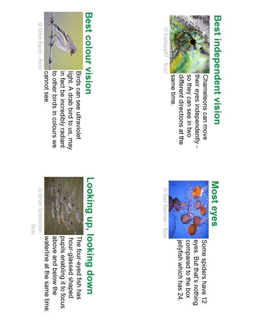 Vision 11: Best Independent Vision Vision 10: Best Colour Vision Vision 8: Looking UP, Looking Down Vision 9: Most Eyes