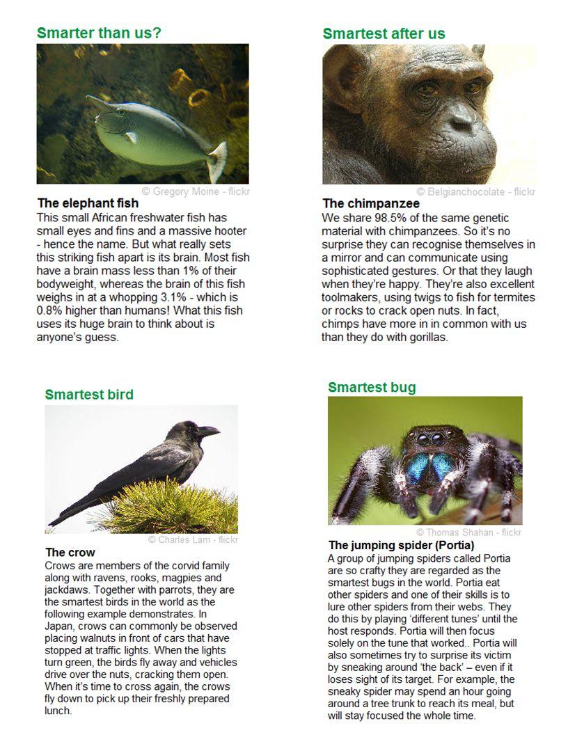 Smartest 3: Smartest After Us Smartest 6: Biggest Brain For Body Size Smartest 4: Smartest Bird Smartest 5: Smartest Bug