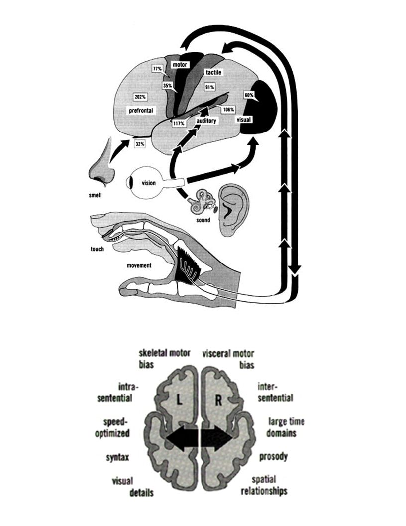 Higher order functions (such as memory, attention, emotion, thought, consciousness, identity) require large-scale or global processes in the brain.