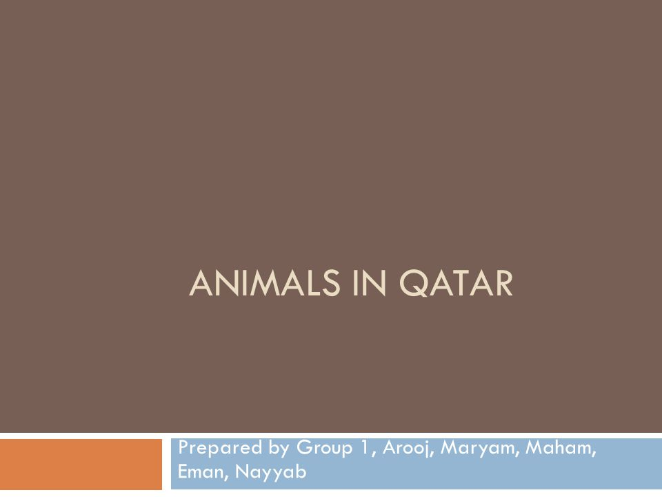 ANIMALS IN QATAR Prepared by Group 1, Arooj, Maryam, Maham, Eman, Nayyab