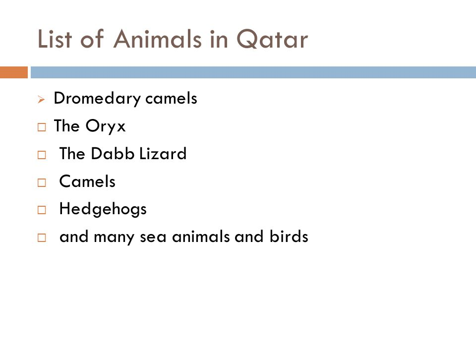 List of Animals in Qatar  Dromedary camels  The Oryx  The Dabb Lizard  Camels  Hedgehogs  and many sea animals and birds
