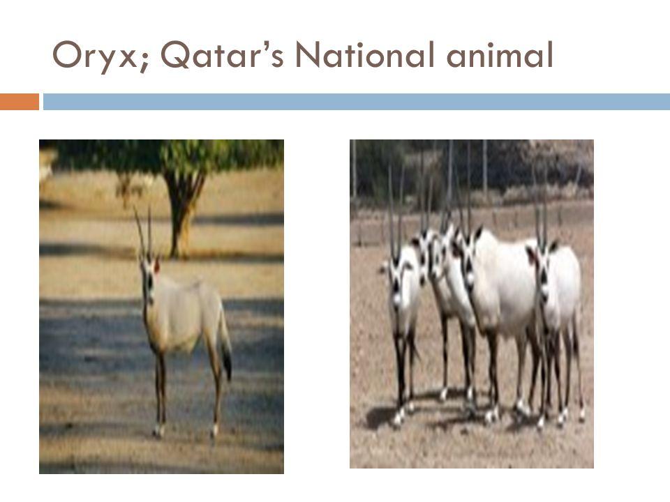 Oryx; Qatar's National animal