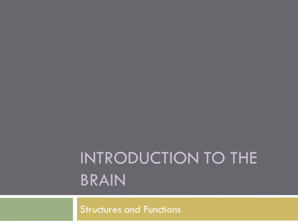 INTRODUCTION TO THE BRAIN Structures and Functions