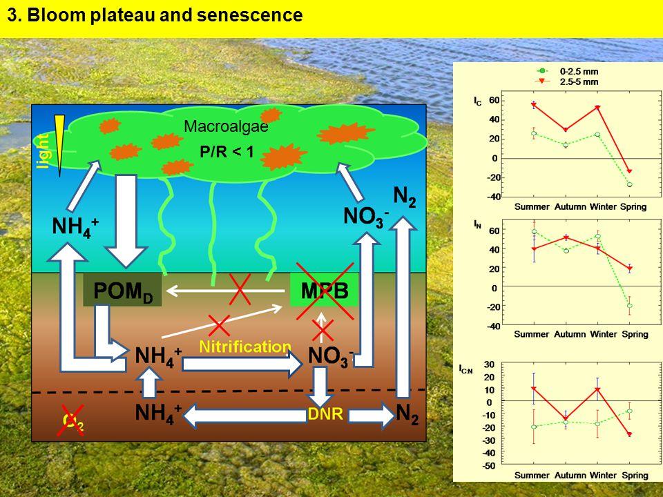 Macroalgae P/R < 1 3. Bloom plateau and senescence
