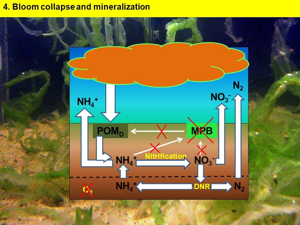 NO 3 - O2O2 N2N2 MPB NH 4 + POM D Nitrification DNR N2N2 NH 4 + 4.