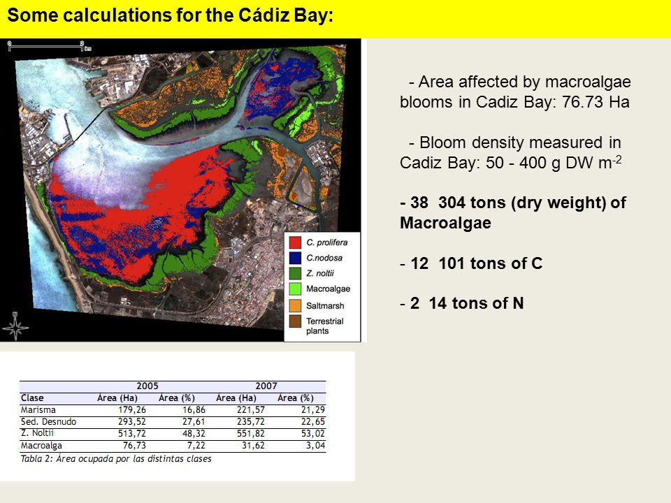 - Area affected by macroalgae blooms in Cadiz Bay: 76.73 Ha - Bloom density measured in Cadiz Bay: 50 - 400 g DW m -2 - 38 ­ 304 tons (dry weight) of Macroalgae - 12 ­ 101 tons of C - 2 ­ 14 tons of N Some calculations for the Cádiz Bay: