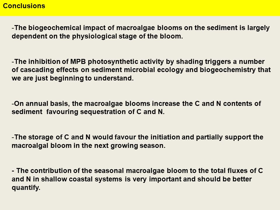Conclusions -The biogeochemical impact of macroalgae blooms on the sediment is largely dependent on the physiological stage of the bloom.