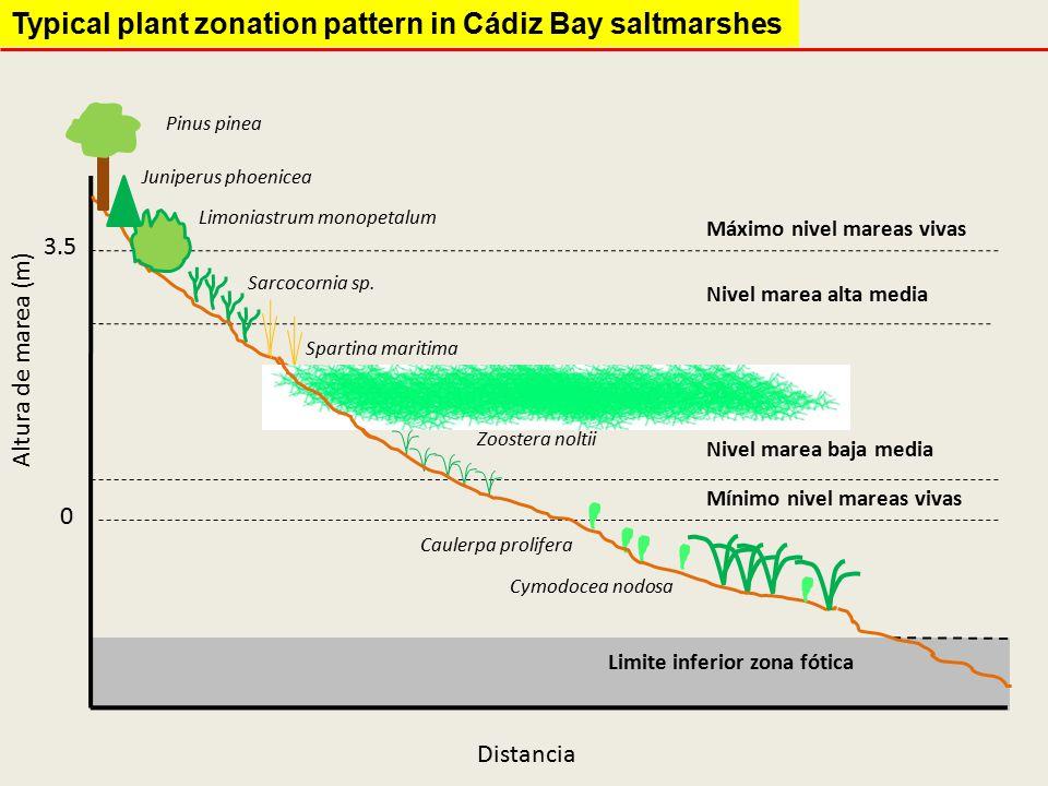 Biomass NovDecJanFebMarApr Exponential Stationary Senescence & Mineralization Initiation Stages of macroalgae annual cycle