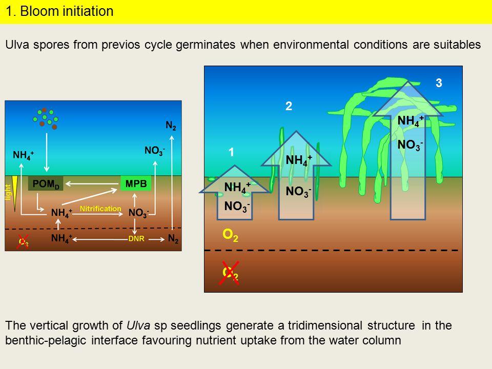 P/R > 1 Water column nutrients Sediment nutrients