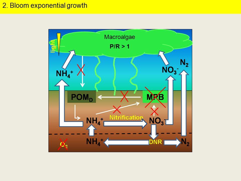 t = 0t = 2 t = 6t = 20 Luz Oscuridad Áreas cubiertas Áreas descubiertas Oxygen profiles at the sediment-water interface 4.