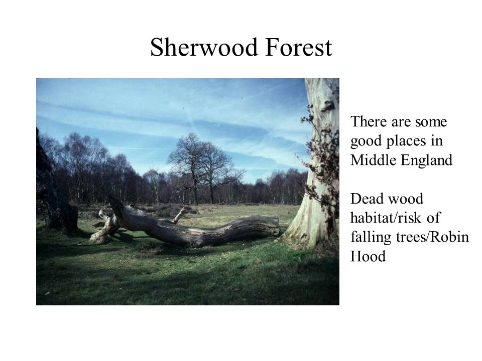 Sherwood Forest There are some good places in Middle England Dead wood habitat/risk of falling trees/Robin Hood