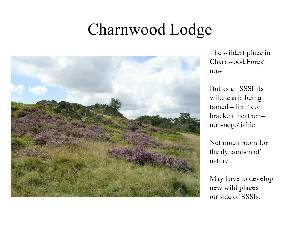 Charnwood Lodge The wildest place in Charnwood Forest now. But as an SSSI its wildness is being tamed – limits on bracken, heather – non-negotiable. N