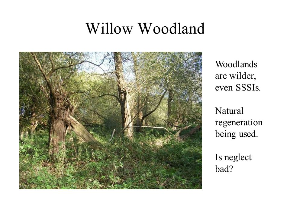 Willow Woodland Woodlands are wilder, even SSSIs. Natural regeneration being used. Is neglect bad?